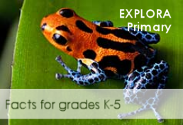 Orange and blue treefrog on a leaf captioned facts for graded 1-5
