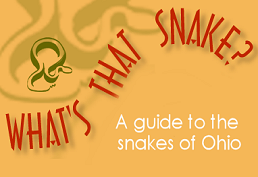 What's that snake?  A guide to the snakes of Ohio.